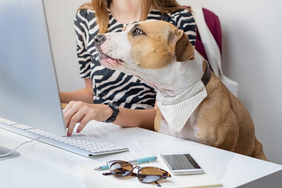 Code du travail : animaux sur le lieu de travail